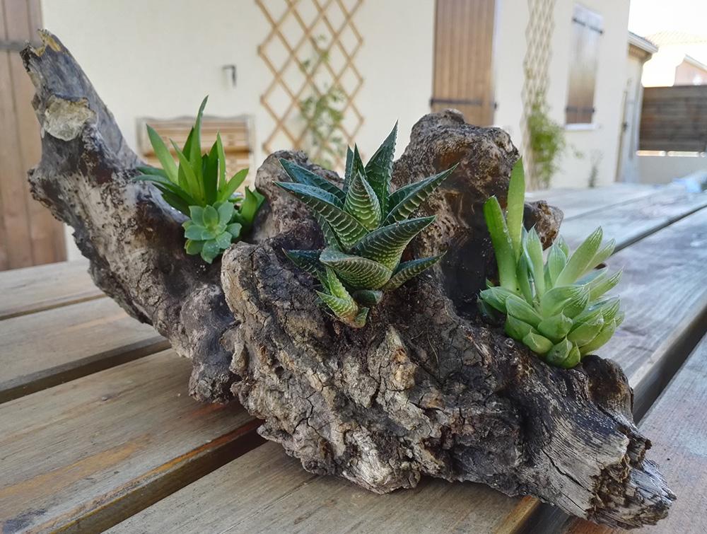 DIY : pot en bois pour plantes grasses